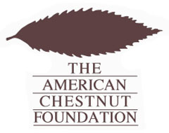 American Chestnut Association